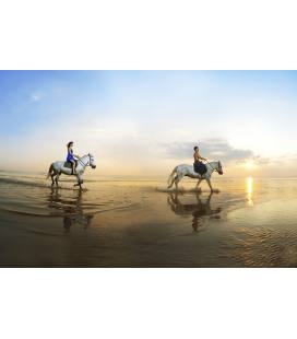 Special horse riding on the beach